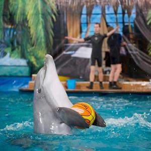 Дельфинарии, океанариумы Кагальницкой