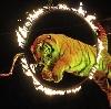 Цирки в Кагальницкой