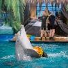 Дельфинарии, океанариумы в Кагальницкой